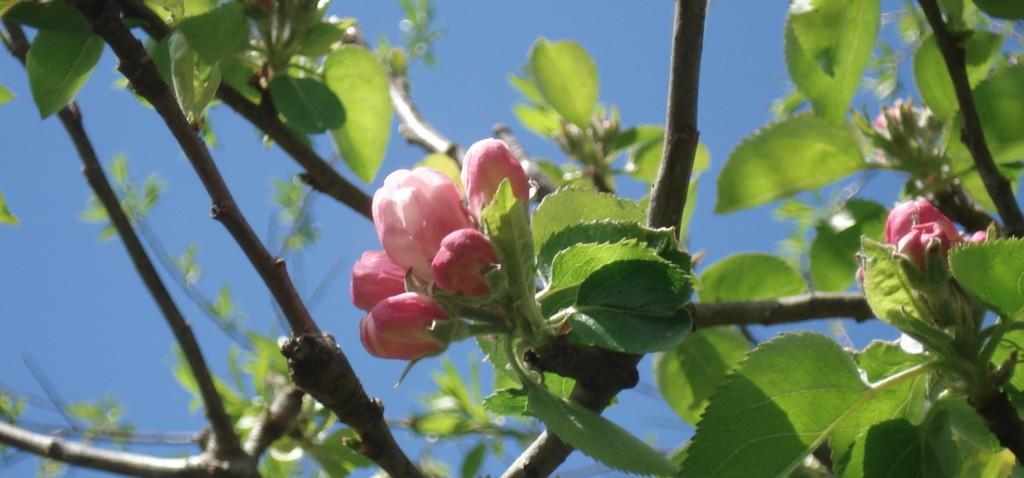 Findhorn-mei-2010-0941.jpg